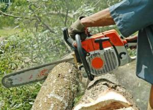 tree_cuting_india