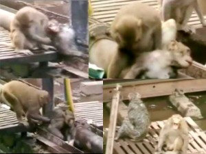 save_monkey343