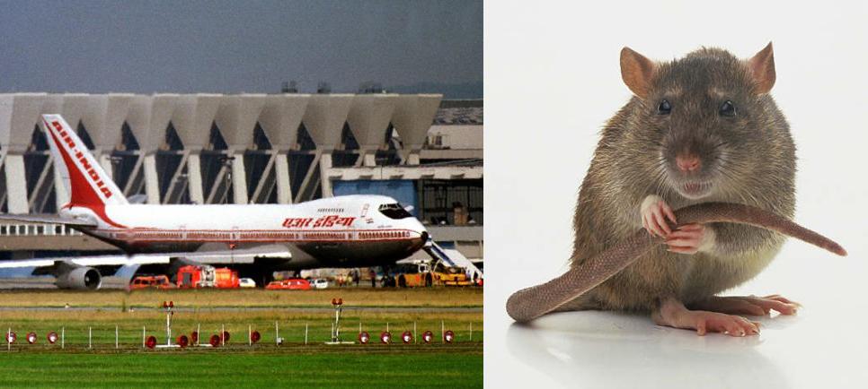 rat in air india