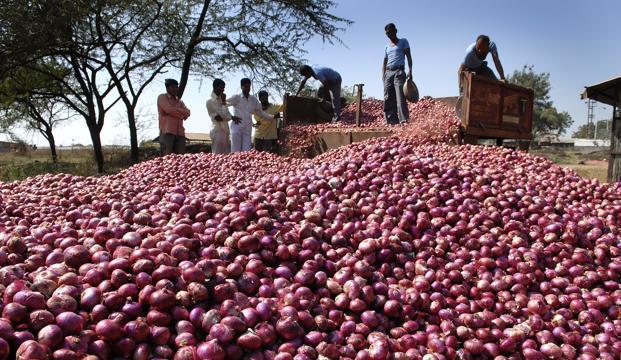 Onion farmer213