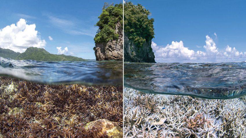 Great Barrier Reef4