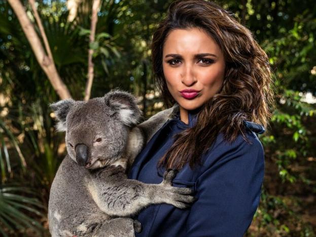 आॅस्ट्रेलियामध्ये पर्यटनाला प्रोत्साहन देण्यासाठी फ्रेंड आॅफ आॅस्ट्रेलिया (एफओए) पॅनलमध्ये पहिल्यांदाच भारतीय महिला अॅम्बेसेडर म्हणून अभिनेत्री परिणीती चोप्राची निवड झालीये. सध्या परिणीती आॅस्ट्रेलियामधील क्वीसलँड इथं असून तिने एका कोआला या प्राण्यासोबत फोटो शेअर केलाय. या फोटोसह परिणीतीने आॅस्ट्रेलियातील विविध ठिकाणाचे फोटोही शेअर केले आहे. पण, कोआला या प्राण्यासोबत काढलेला फोटो सोशल मीडियावर चर्चेचा विषय ठरलाय. सोशल मीडियाकर्मींनी यावर आक्षेप घेत परिणीतीची खिल्ली उडवलीये. तुम्ही तर या प्राण्यासारख्याच दिसता अशा कमेंट तिच्याच इन्सटाग्राम अकाऊंटवर पोस्ट केल्या आहेत.