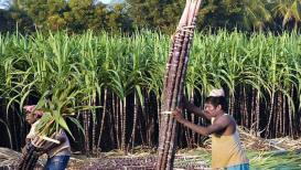 शेतकऱ्यांच्या फायद्याची बातमी, उसाच्या एफआरपी दरात वाढ