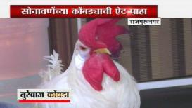 तुर्रेबाज कोंबड्याची शाही बडदास्त