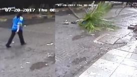 नारळाचं झाडं महिलेवर कोसळलं, घटना कॅमेऱ्यात कैद