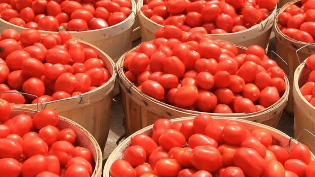 70 हजारांचे टोमॅटो गेले चोरीला